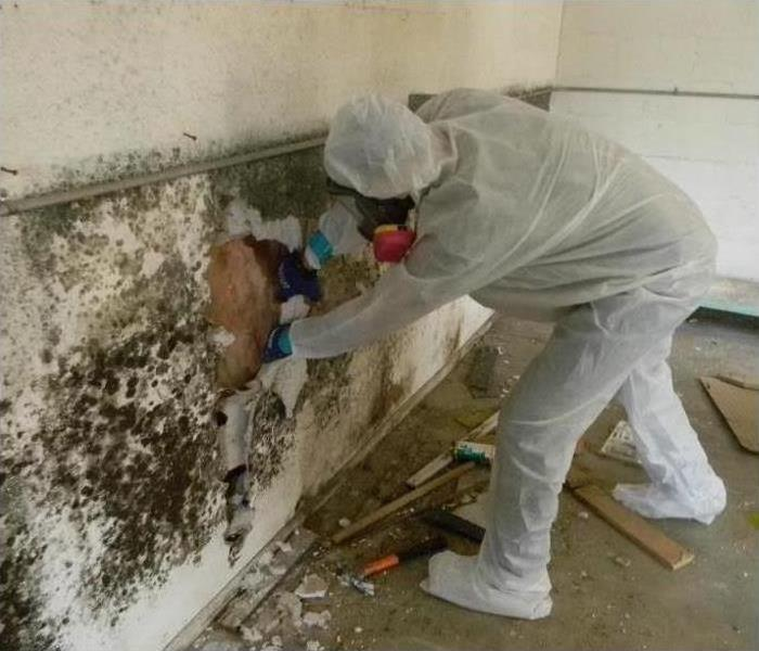 If You Think You Have a Mold Problem Call SERVPRO