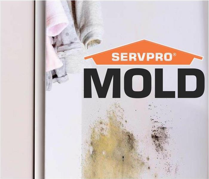Mold Remediation What Causes Mold To Grow