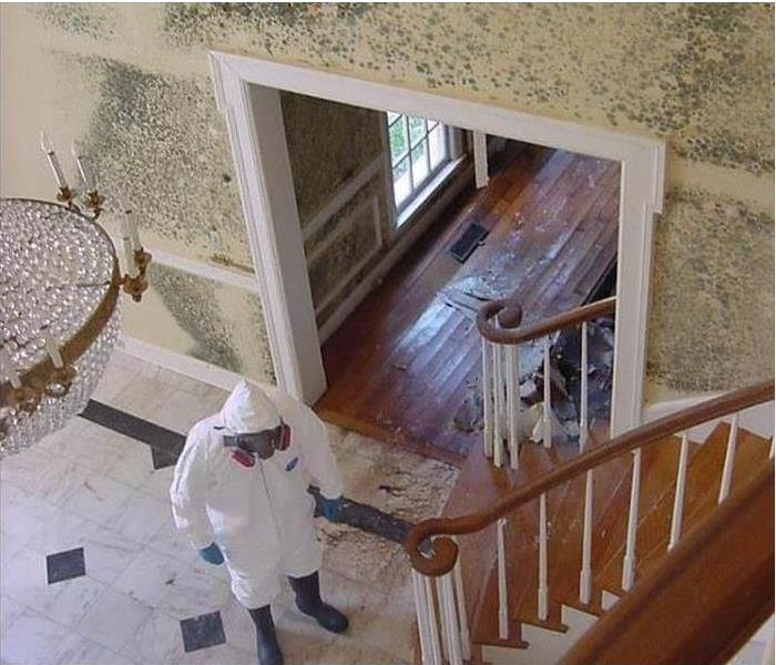 Mold Remediation How to Choose Between Mold Removal and Mold Remediation