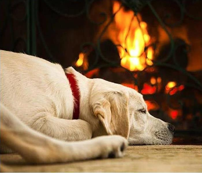 Fire Damage How to Keep Your Pets Safe During a Fire